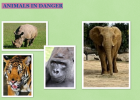 Treasure hunt: Animals in danger | Recurso educativo 33616