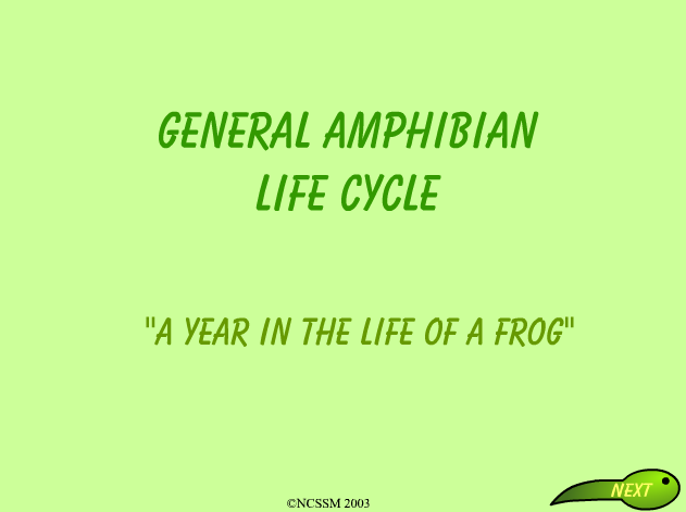 General amphibian life cycle | Recurso educativo 33874