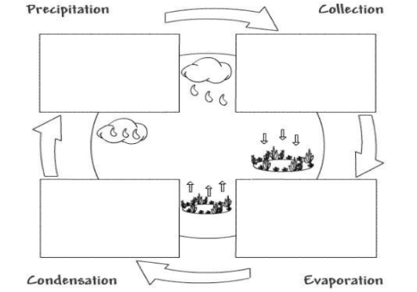 The water cycle | Recurso educativo 38657