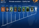 Primate evolution, family ties | Recurso educativo 40712