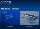 Penguin diversity | Recurso educativo 41259