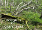 Bosques de Cantabria | Recurso educativo 44381