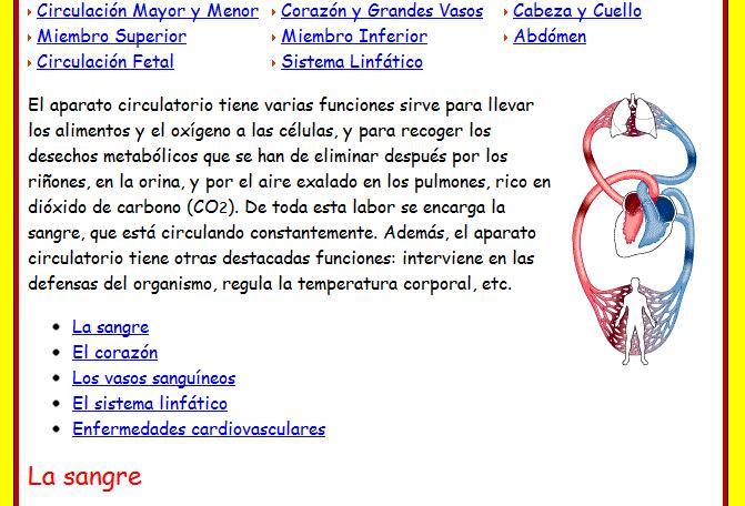 Información sobre el sistema circulatorio - Imagui