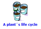 A plant's life cycle | Recurso educativo 48270