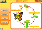 Butterfly life cycle | Recurso educativo 49618