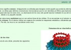 Los virus | Recurso educativo 49761