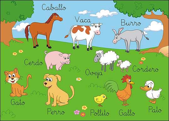 Animales dom sticos recurso educativo 50243 tiching for Mural nuestra carne