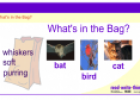 What's in the bag? | Recurso educativo 52548