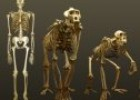 Skeletal anatomy | Recurso educativo 58096