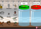 Insects | Recurso educativo 21762