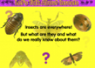 Let's talk about insects | Recurso educativo 79518