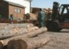 Wood processing industry | Recurso educativo 85583