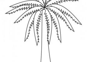 Palmboom Kleurplaat Palmera Para Colorear Recurso Educativo 103118 Tiching