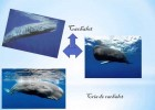 Animals Marins | Recurso educativo 687220