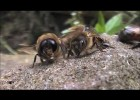 Declining Bee Populations in the UK | Recurso educativo 725830