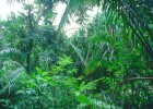 Bosque tropical | Recurso educativo 598059