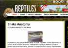 Snake Anatomy | Recurso educativo 742247