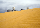 Biofuels are driving food prices higher - The Guardian. | Recurso educativo 742553