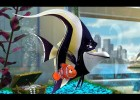 Finding Nemo (2003) - Attempt to escape | Recurso educativo 769547